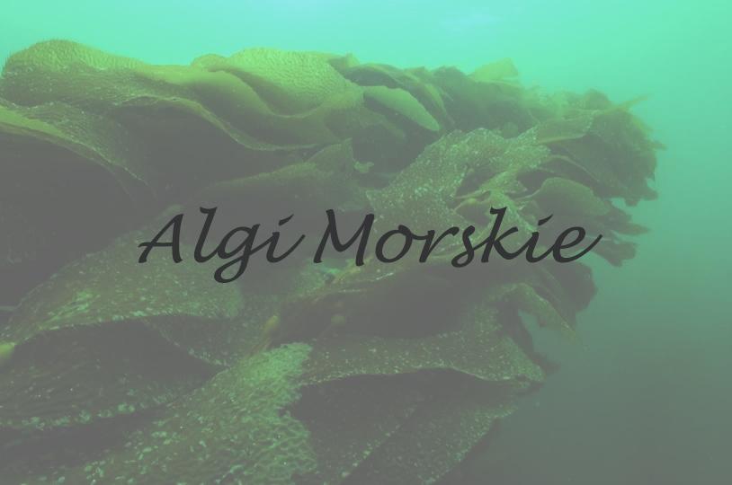 Chlorella i Spirulina. Oczyszczająca moc alg morskich.